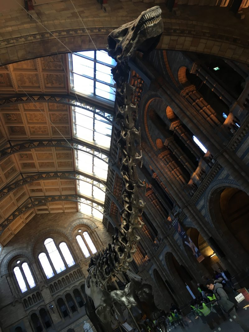 Lo scheletro Dippy appeso all'ingresso del Natural History Museum