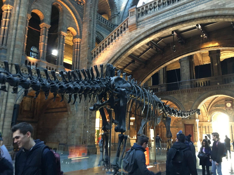Cosa vedere al Natural History Museum di Londra con bambini