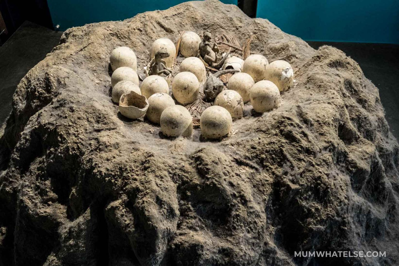 Uova di dinosauro al Natural History Museum di Londra