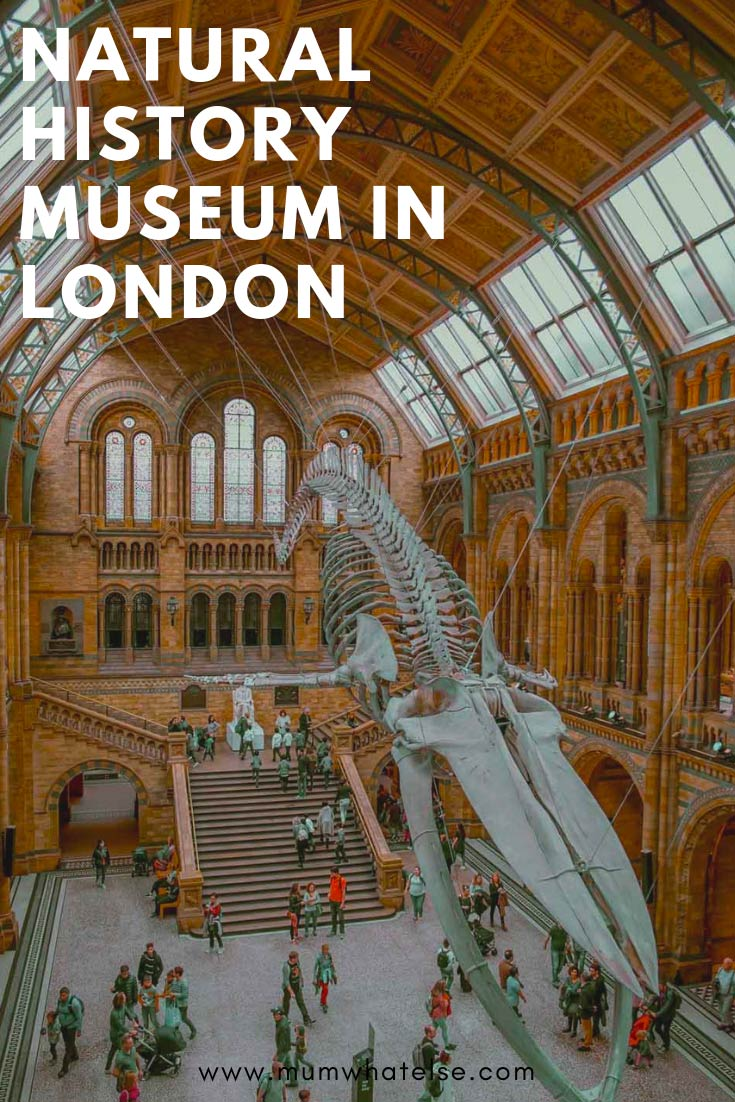 natural history museum london review