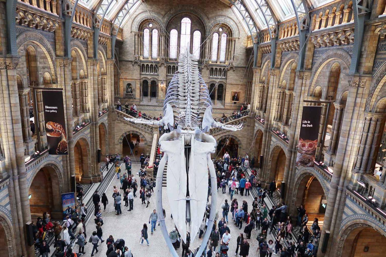 scheletro della balena azzurra all'ingresso del natural history museum di Londra