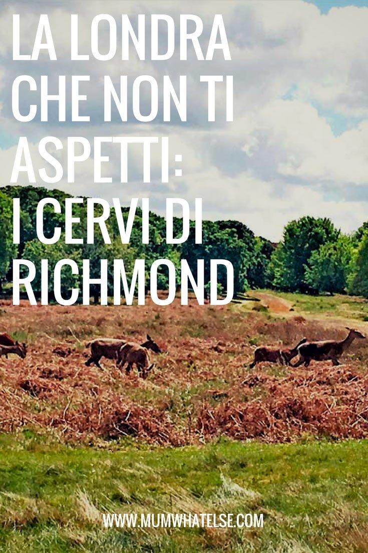 londra-richmond-cervi