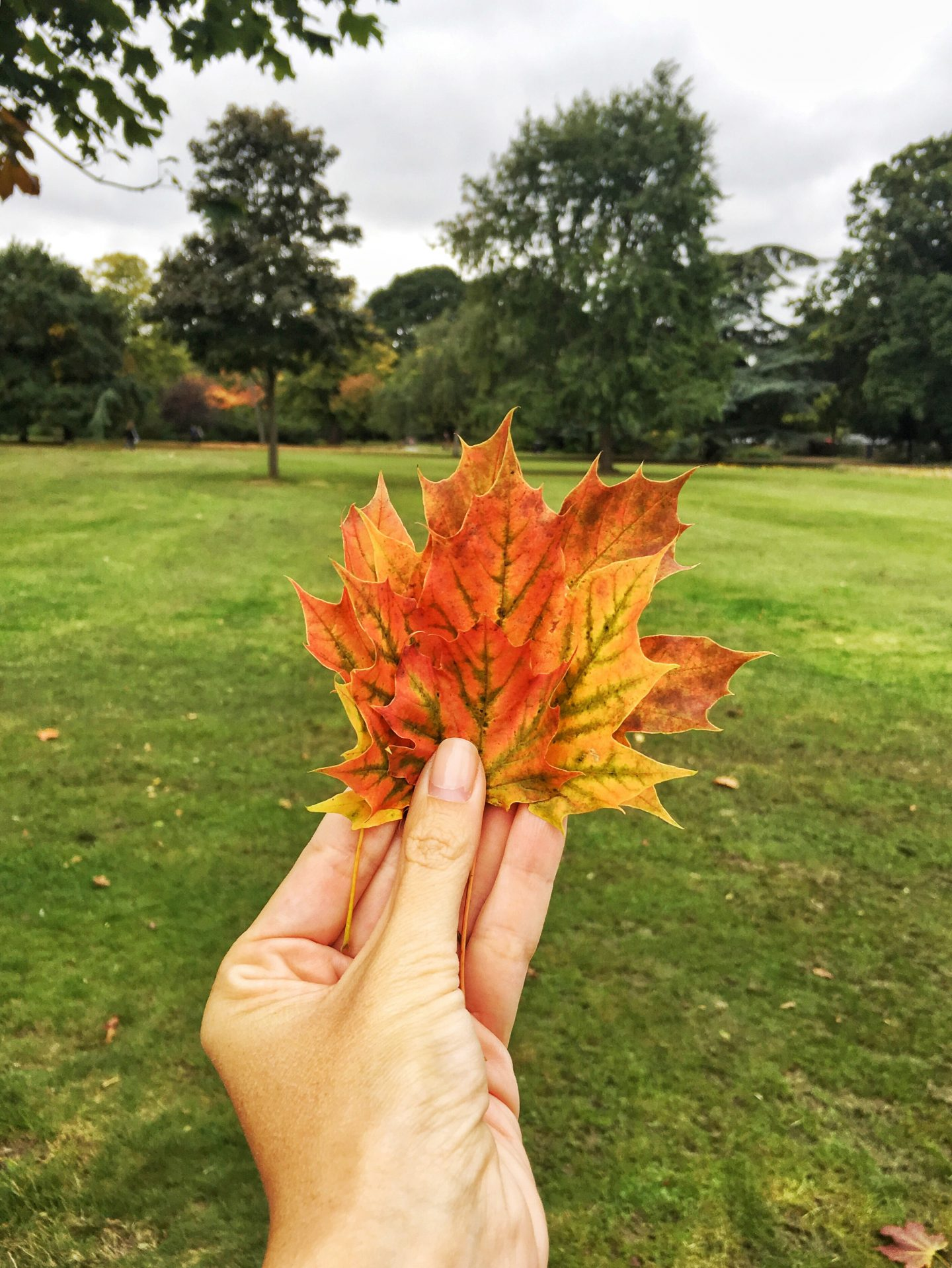 What to do in London with children in autumn