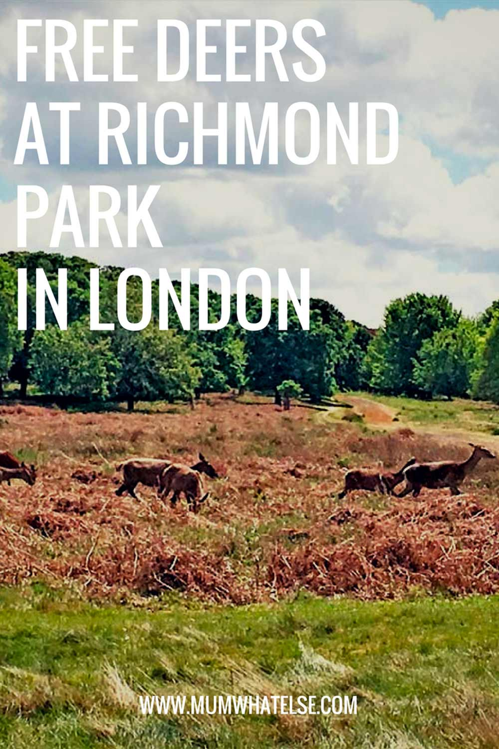 Richmond-park-London