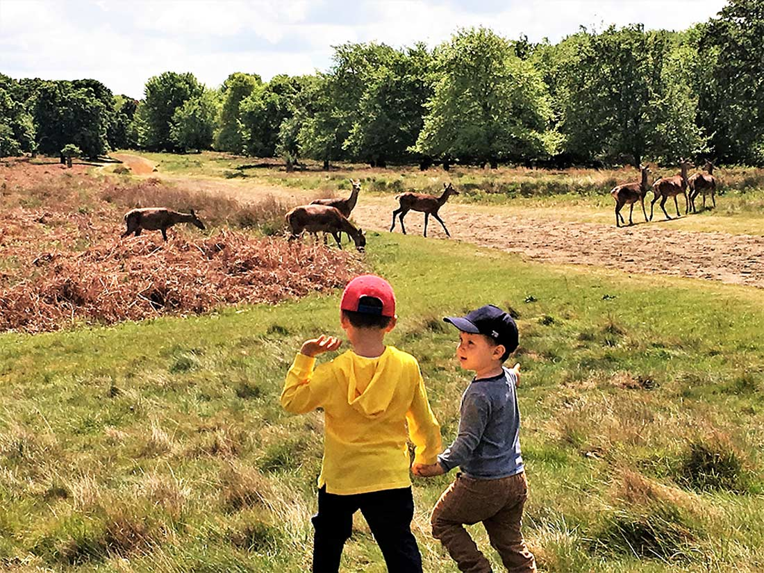 London with kids: free deers at the Richmond park