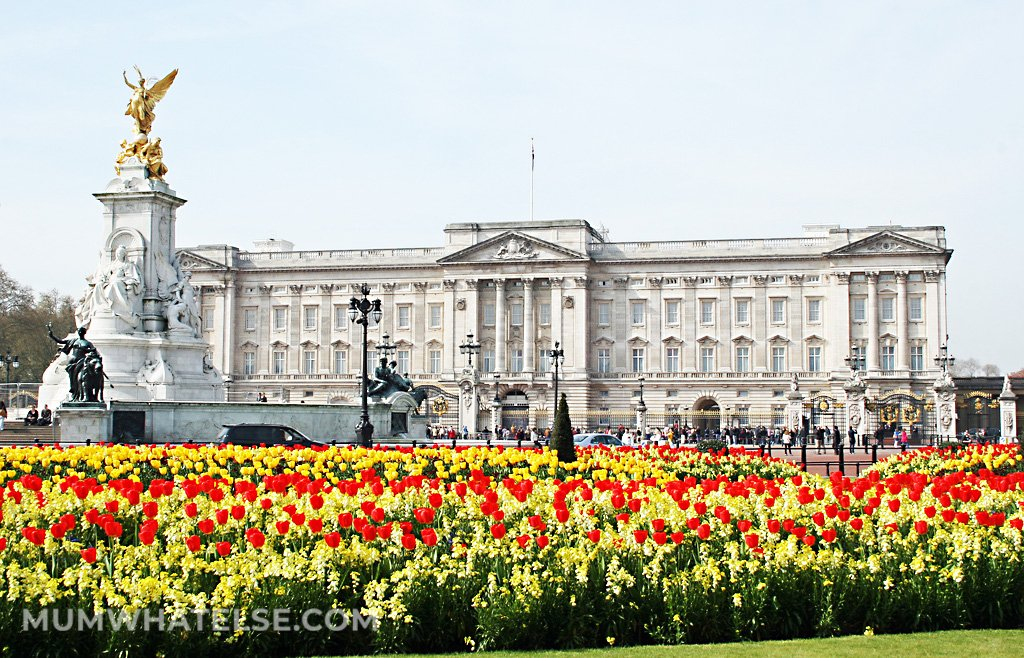 Tulips in front of Buckingham Palace