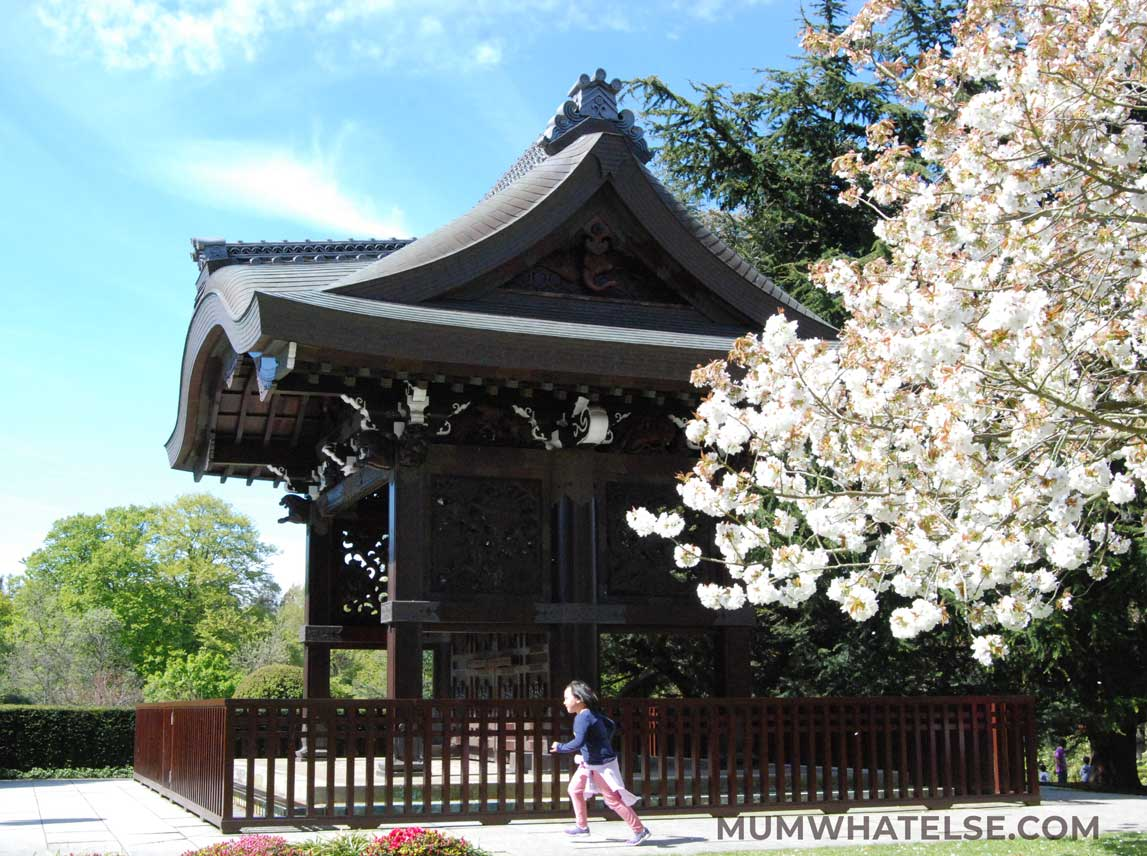 Japanese house with tree in bloom at Kew Gardens in London