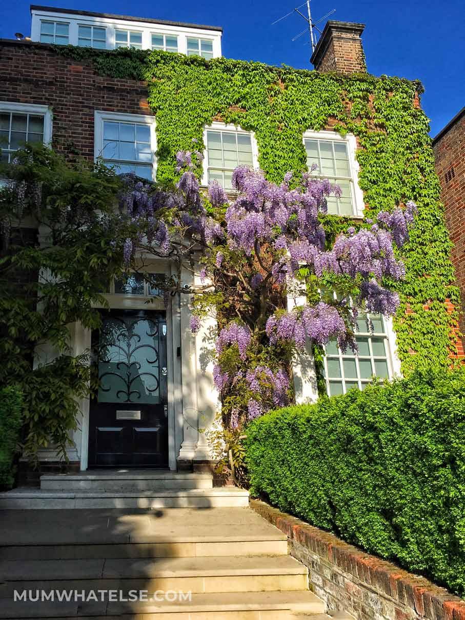 Casa ricoperta di glicine in Holland Park a Londra