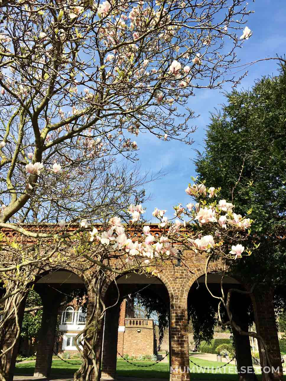 magnolia and in the background Holland Park