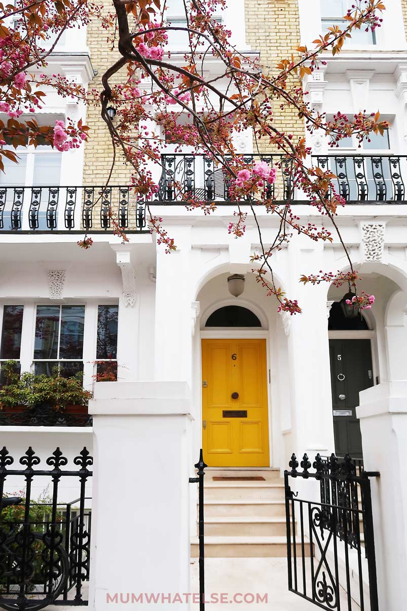 Cherry Blossom at Harnoncourt Terrace-Chelsea