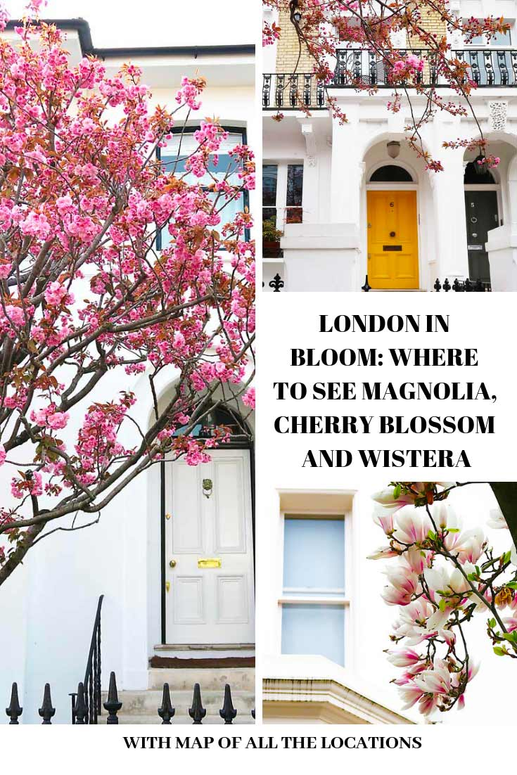 London in bloom, trees with cherry blossom and a yellow door with text overlay