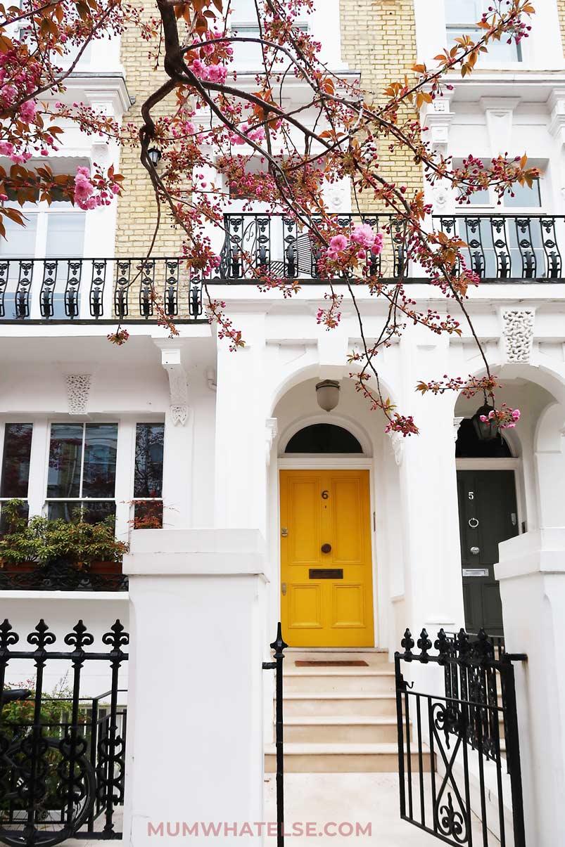 ciliegio in fiore con porta gialla in Harnoncourt Terrace - Chelsea a Londra