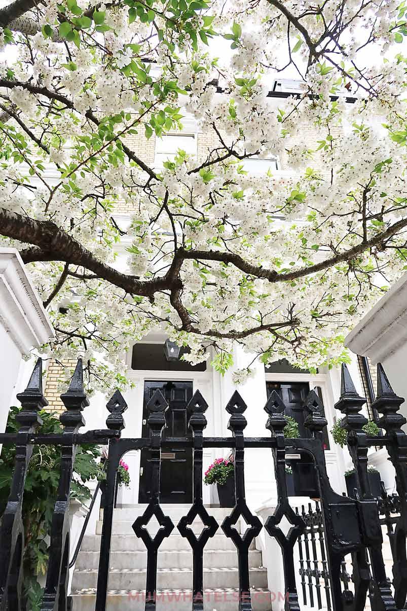 cancello di una casa con le scale e un bellissimo albero di ciliegio