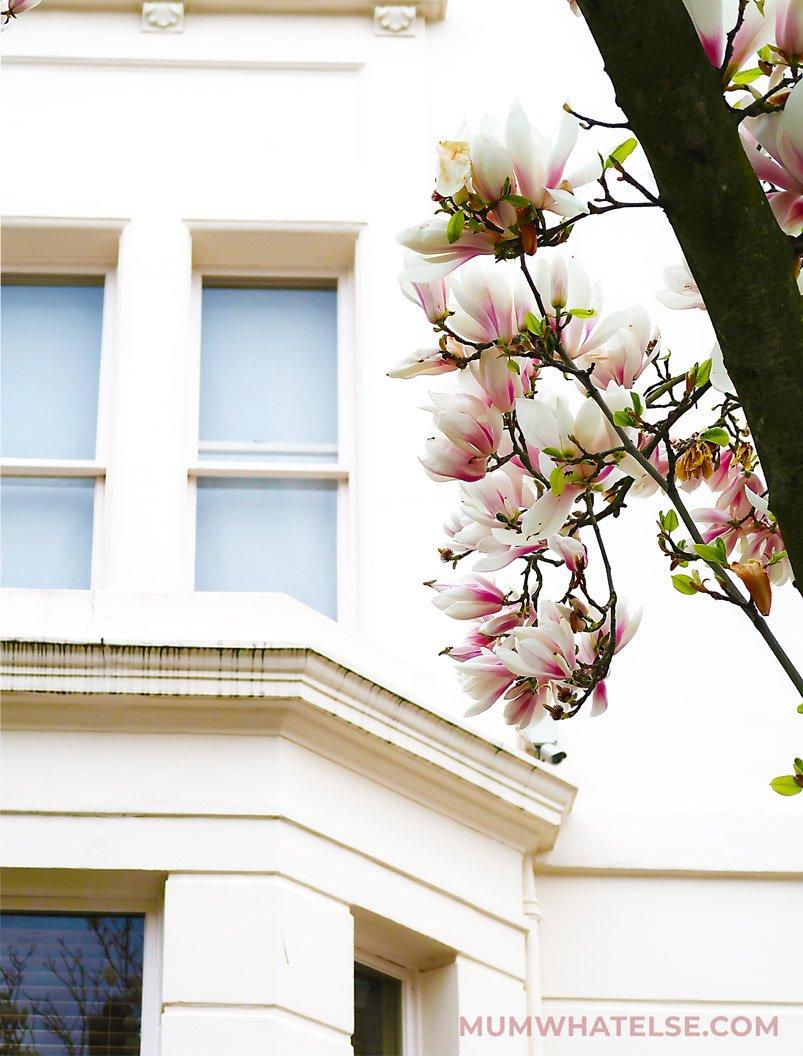 Dettaglio di un fiore di magnolia