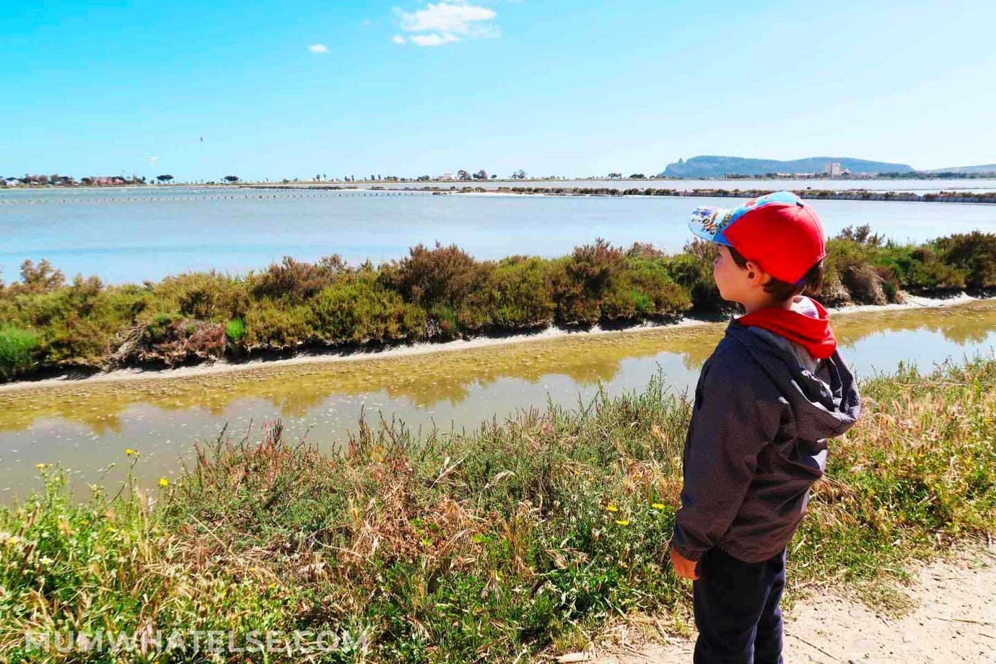 Discover the flamingo park in Cagliari, South Sardinia