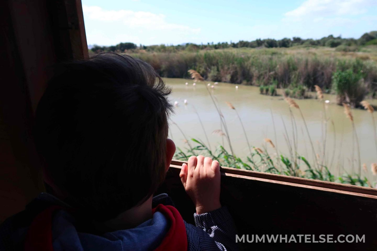 a kid at the top of a lookout tower looking at the flamingos