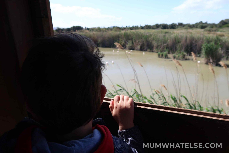 bimbo che guarda i fenicotteri da una torretta di avvistamento