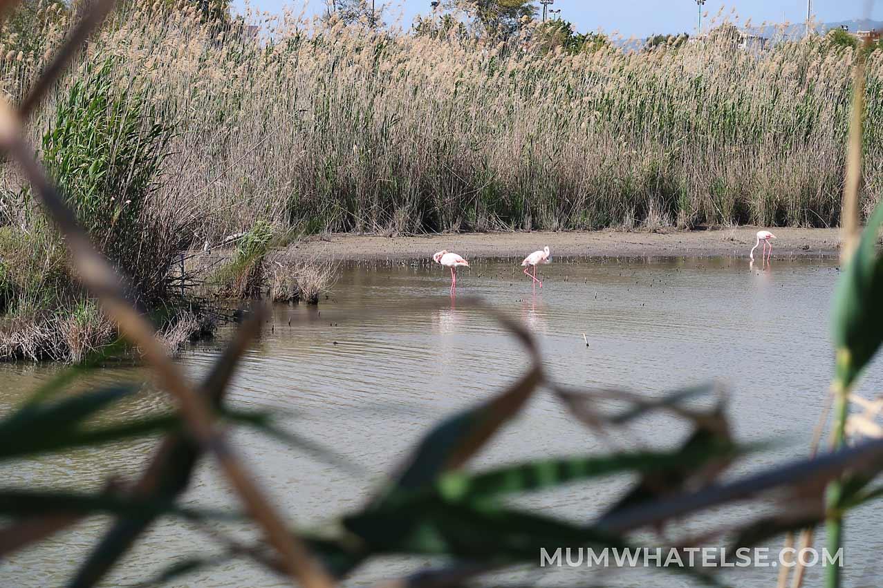 fenicotteri in una laguna