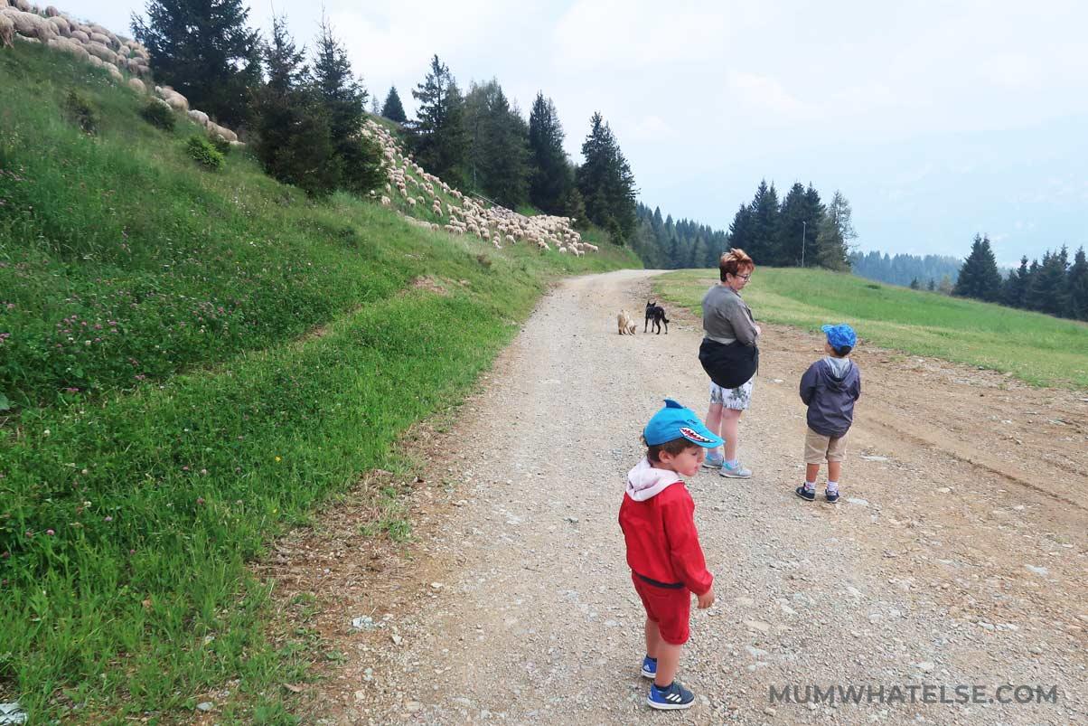 due bambini con la nonna in montagna e le pecore vicino