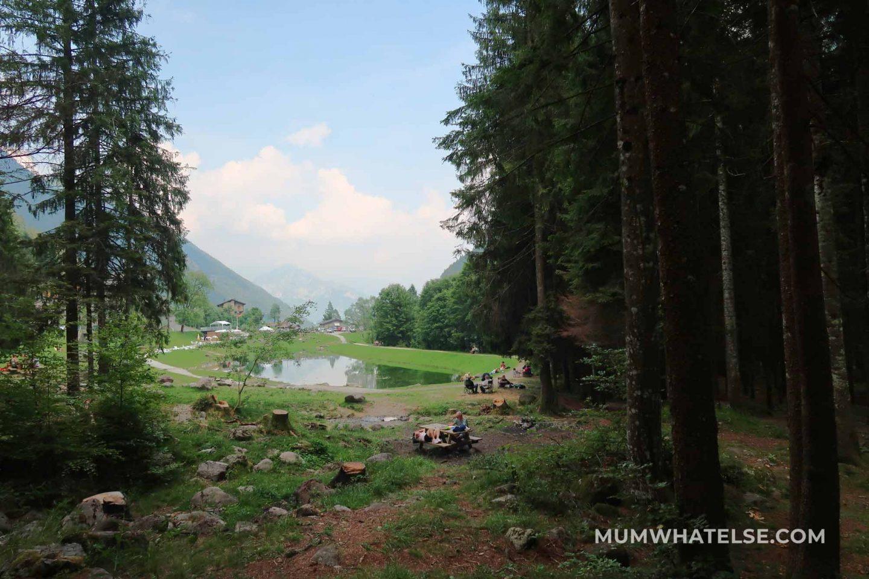 vista del lago di montagna da alcuni alberi di una pineta