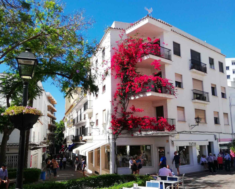 casa bianca a più piani con una pianta di colore rosa di fronte