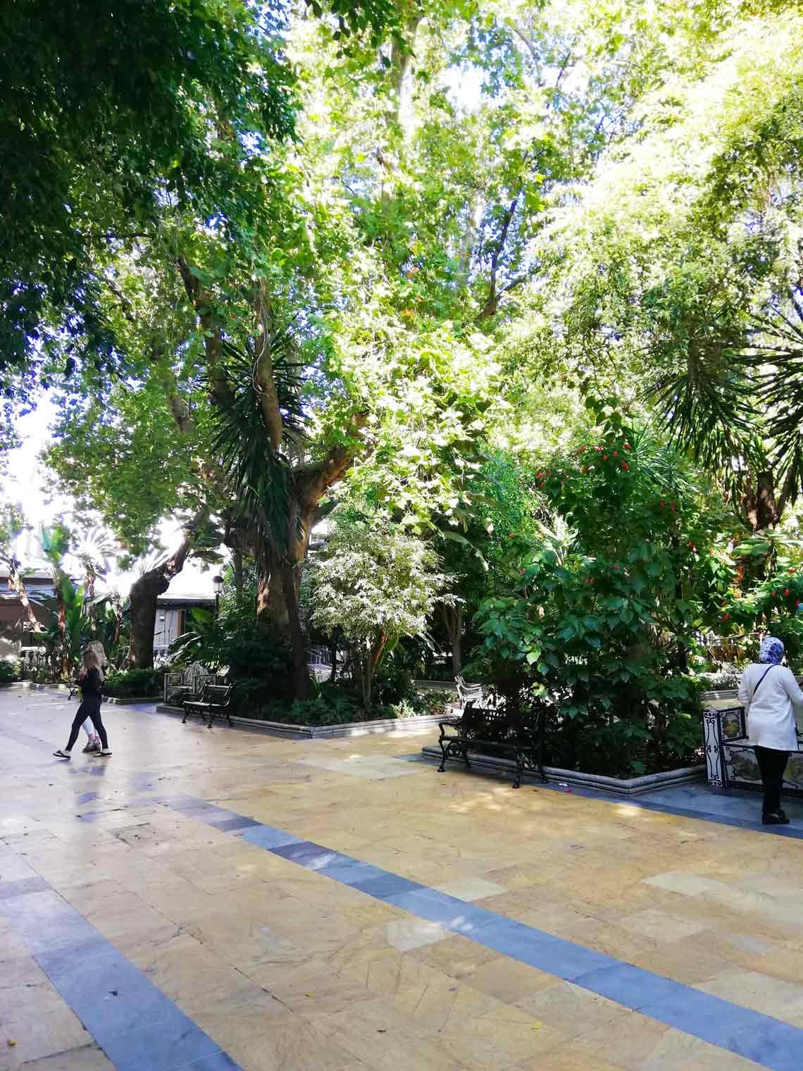 via piastrellata con degli alberi