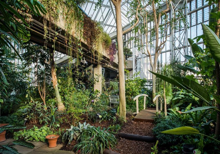 piante all'interno di una serra