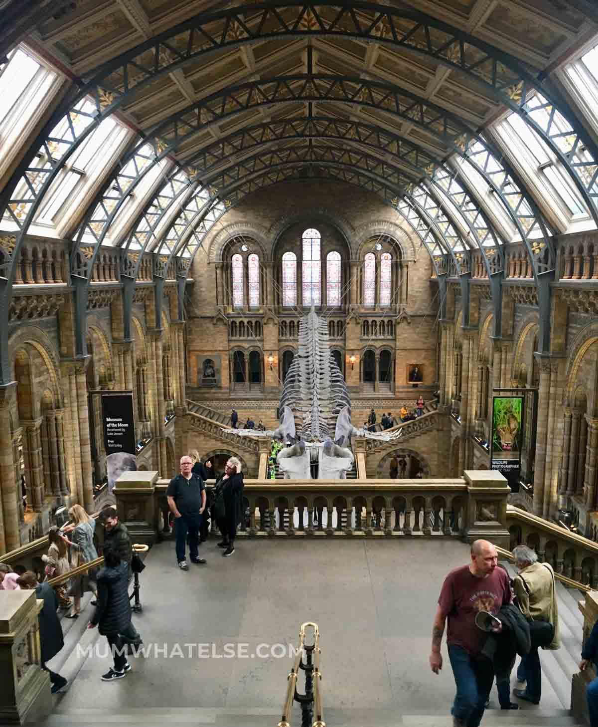 la grande sala del Natural History Museum a Londra