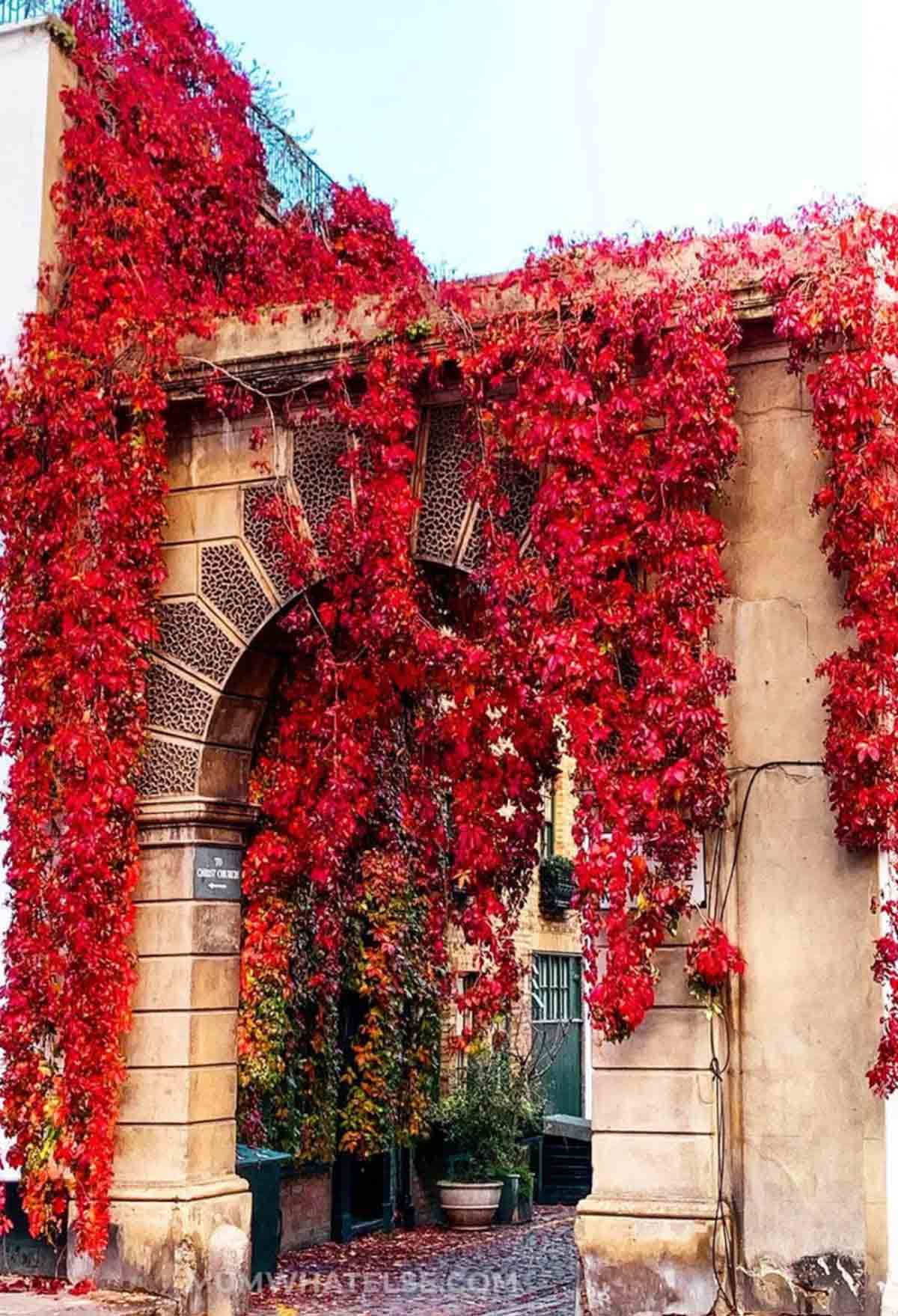 a corner of London with an arch and red leaves