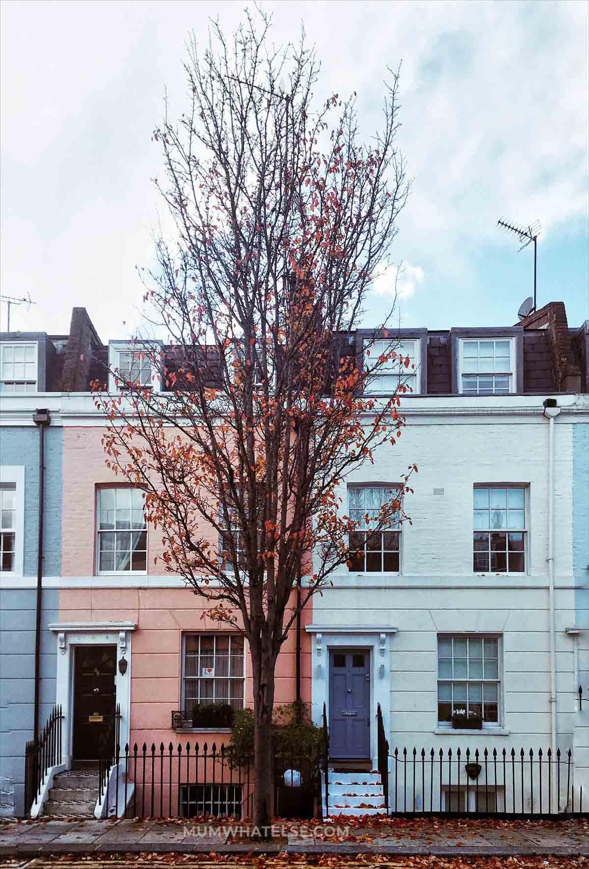due case colorate di Notting Hill e un albero con delle foglie marroni