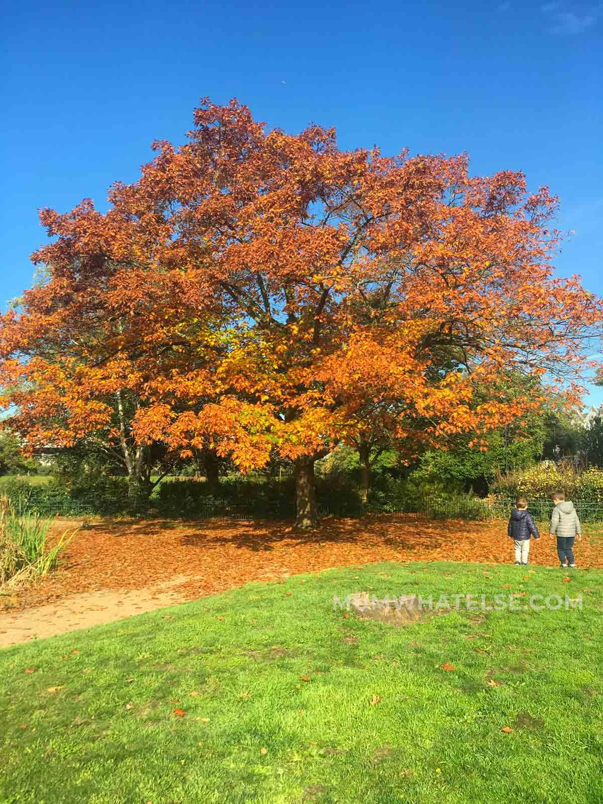 un albero con le foglie arancioni e due bimbi lì vicino
