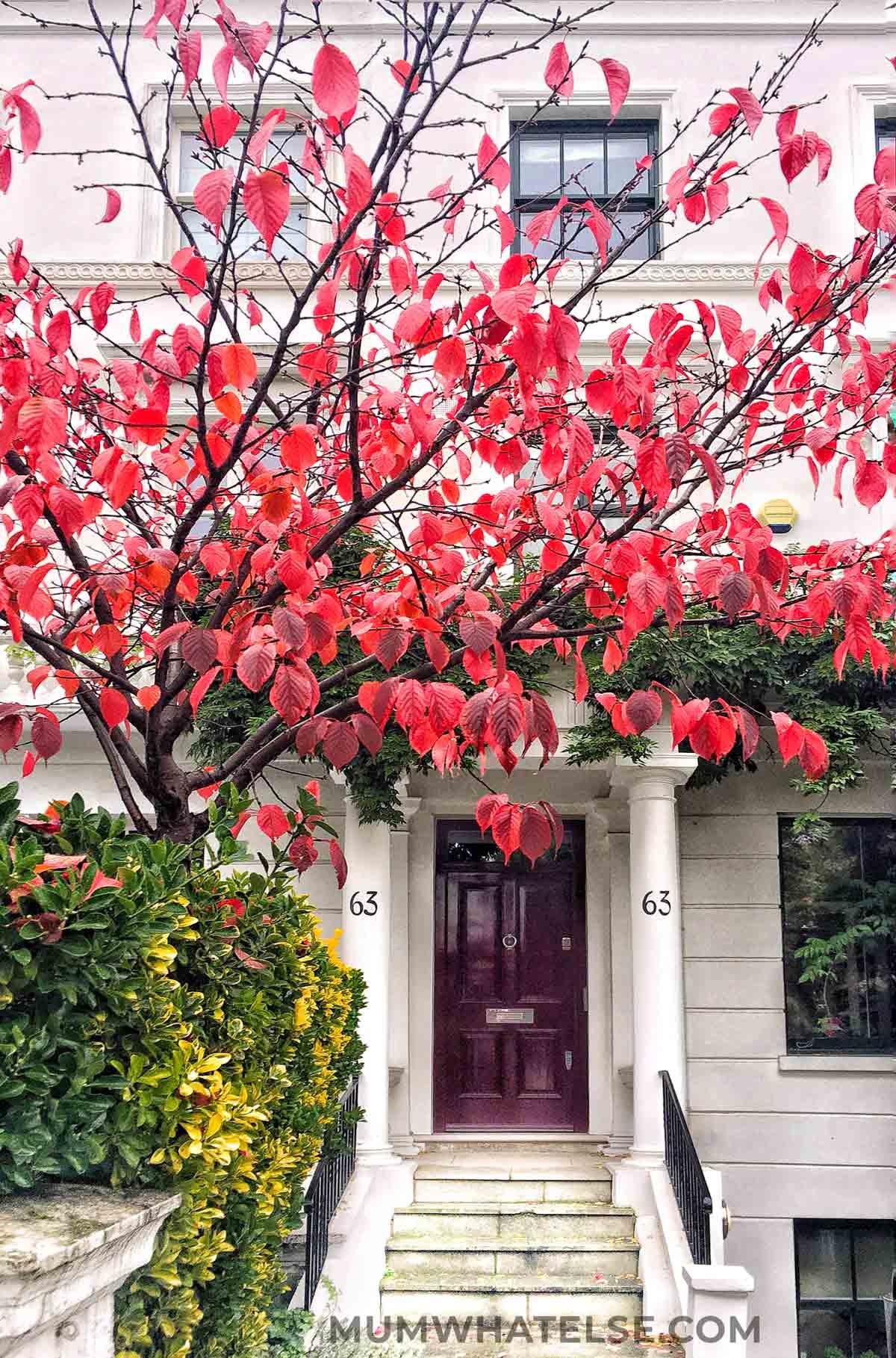 ingresso di una casa vittoriana bianca con un albero con foglie rosse accanto